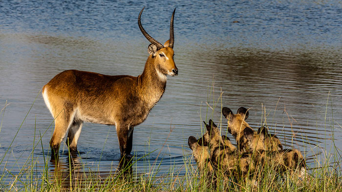 Okavango: River of Dreams (Director's Cut)